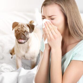 Allergia-scaled